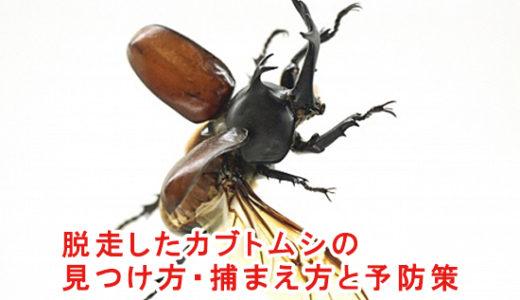 脱走したカブトムシの見つけ方・捕まえ方と予防策