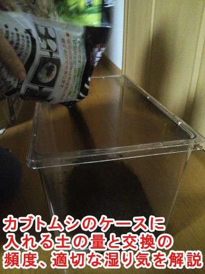カブトムシのケースに入れる土の量と交換の頻度、適切な湿り気を解説