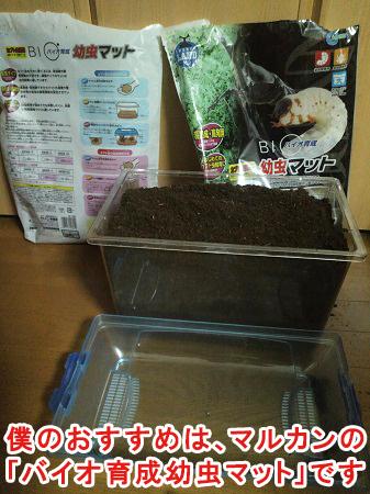 僕のオススメのカブトムシの土