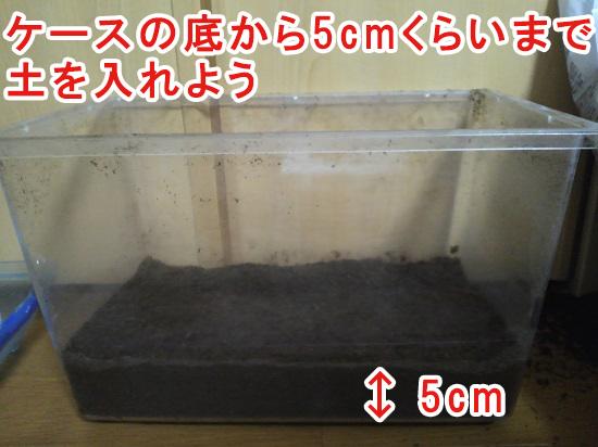 カブトムシの成虫のケースに土を入れる目安