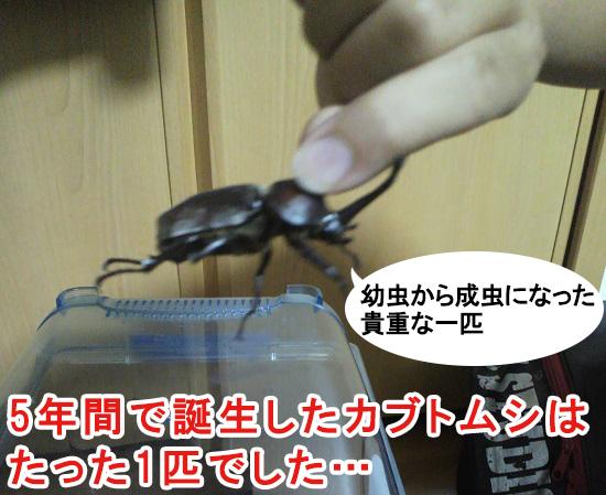 5年間の飼育で生まれた幼虫は1匹