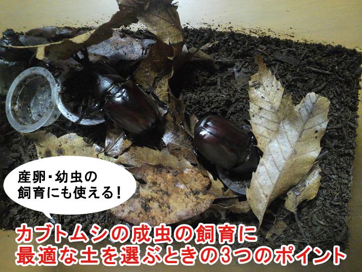 カブトムシの成虫の飼育に最適な土を選ぶときの3つのポイント