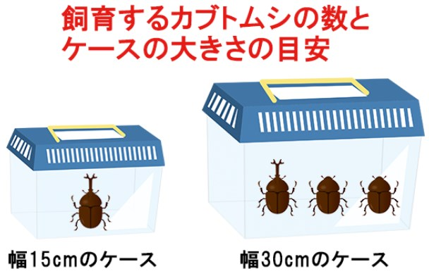 飼育するカブトムシの数とケースの大きさの目安