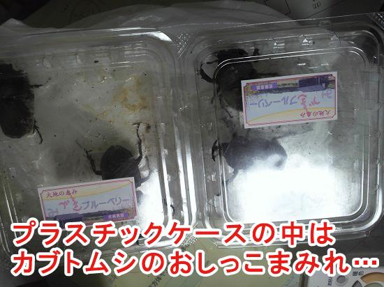水分量が多い餌を与えたカブトムシ