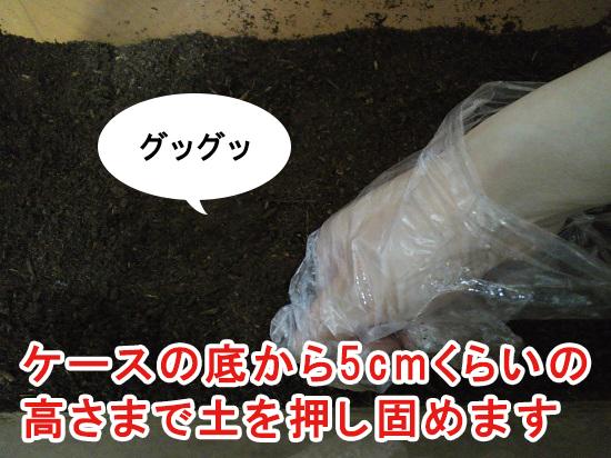メスに産卵させるのが目的の場合の土の量01