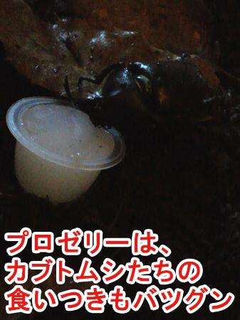 KBファームの「プロゼリー」は食いつきバツグン