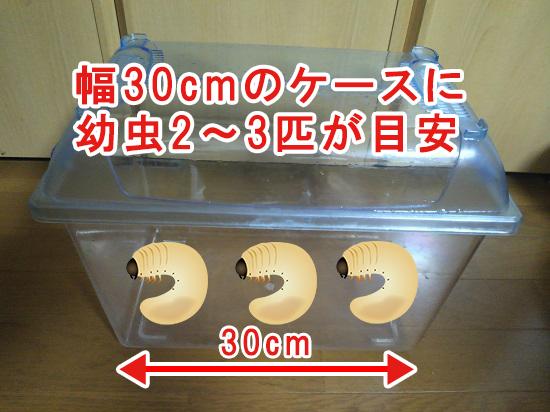 幅30cmのケースに幼虫2~3匹が目安