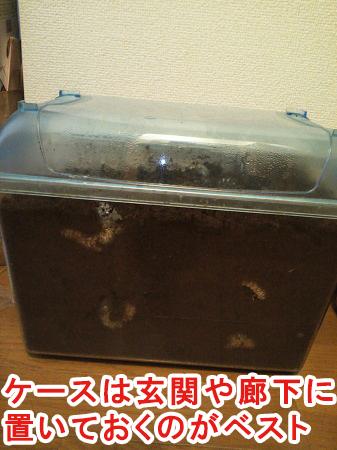カブトムシのケースの置き場所