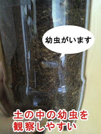 ペットボトルのケースは幼虫の観察に最適