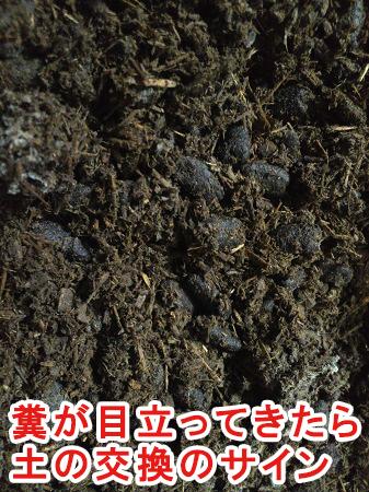 カブトムシの幼虫の土を交換する時期