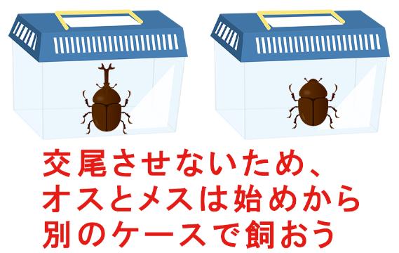 カブトムシを繁殖させない方法