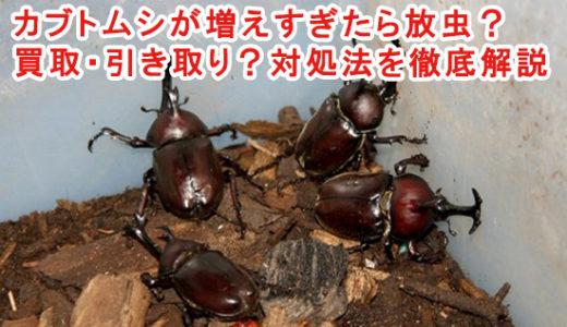 カブトムシが増えすぎたら放虫?買取・引き取り?対処法を徹底解説