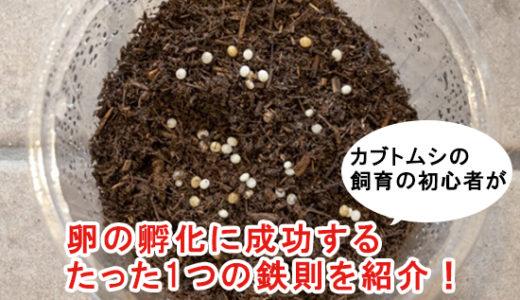 カブトムシの飼育の初心者が卵の孵化に成功するたった1つの鉄則を紹介!