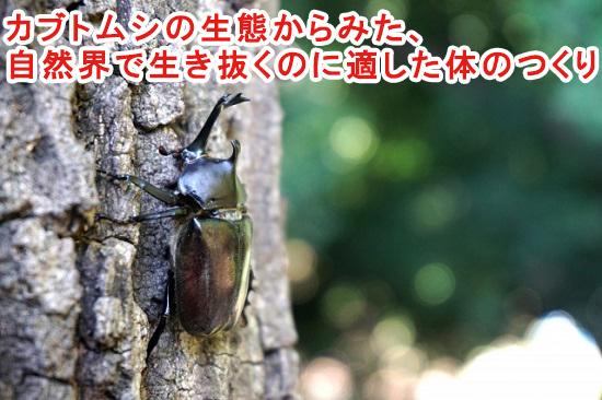 カブトムシの生態からみた、自然界で生き抜くのに適した体のつくり
