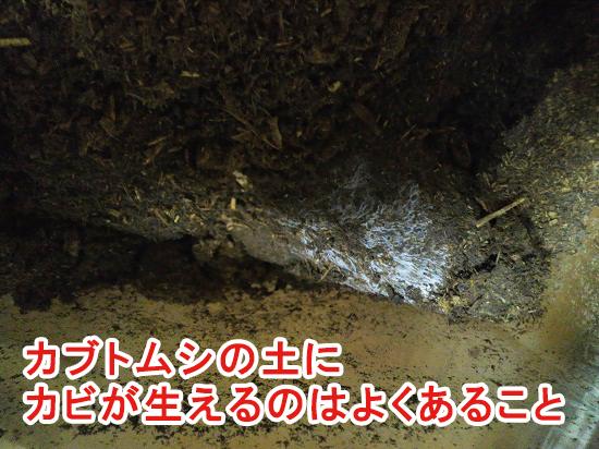 土に生えたカビ