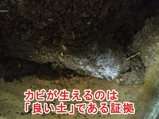 白いカビが生える土は良い土である証拠