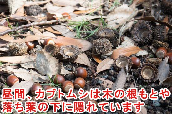 ドングリの木の地面