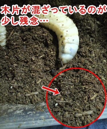 マルカンのバイオ育成幼虫マットに混ざっている木片