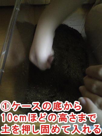 蛹室を作りやすい環境に整える①