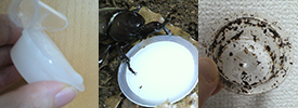 フジコンの消臭アミノゼリー