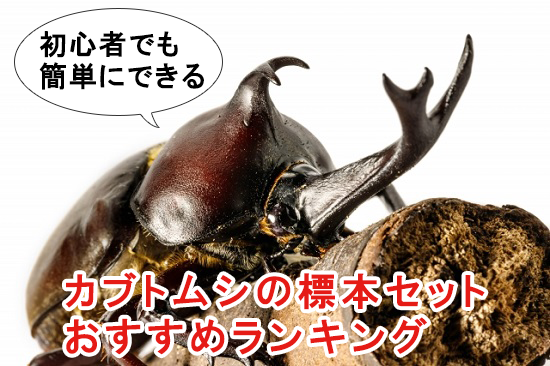 初心者でも簡単にできるカブトムシの標本セットおすすめランキング