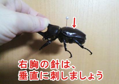 昆虫針の刺し方01