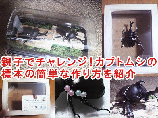 親子でチャレンジ! カブトムシの標本の簡単な作り方を紹介