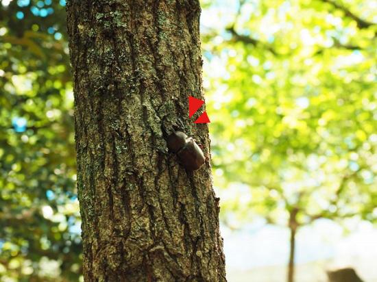 木の幹の影に同化するカブトムシ