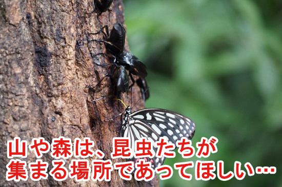 昆虫がいる森