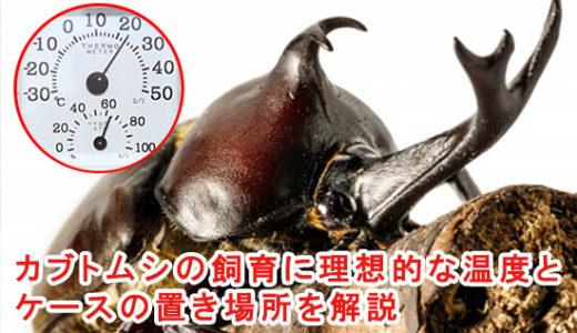 カブトムシの飼育に理想的な温度とケースの置き場所を解説