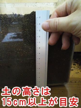 蛹室を作るのに必要な土の高さ