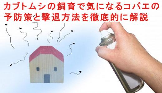 カブトムシの飼育で気になるコバエの予防策と撃退方法を徹底的に解説