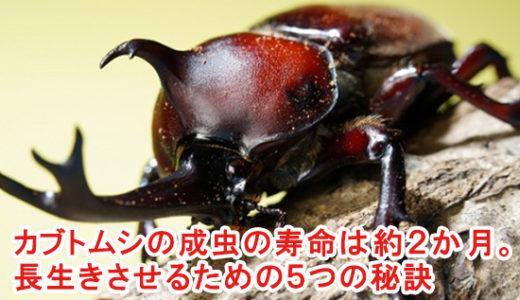 カブトムシの成虫の寿命は約2か月。長生きさせるための5つの秘訣