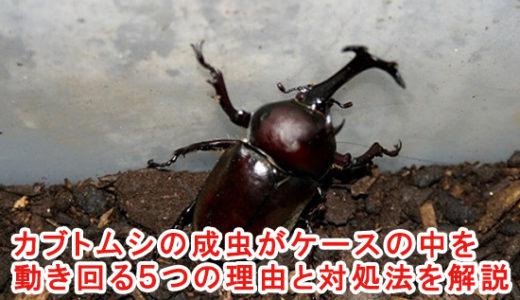 カブトムシの成虫がケースの中を動き回る5つの理由と対処法を解説