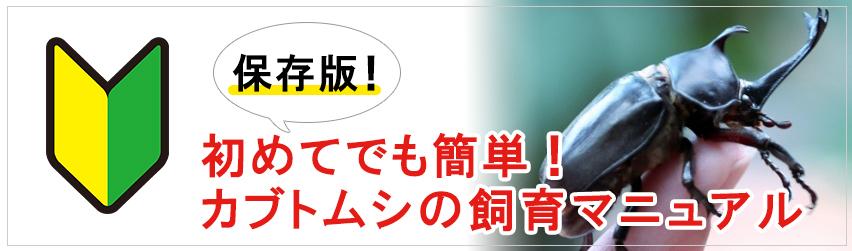 【保存版】初めてでも簡単!カブトムシの飼い方パーフェクトマニュアル