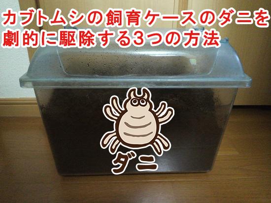カブトムシの飼育ケースに大量発生したダニを劇的に駆除する3つの方法