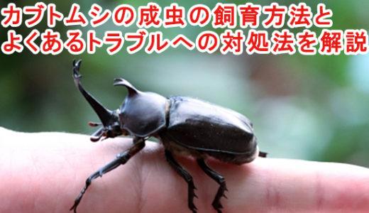 カブトムシの成虫の飼育方法とよくあるトラブルへの対処法を解説