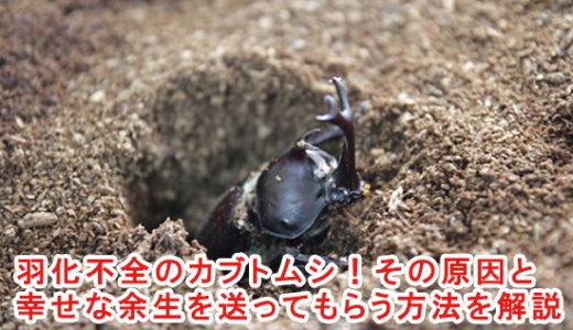 羽化不全のカブトムシ!その原因と幸せな余生を送ってもらう方法を解説